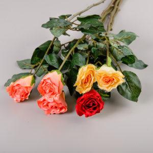 Ветви и одиночные цветы